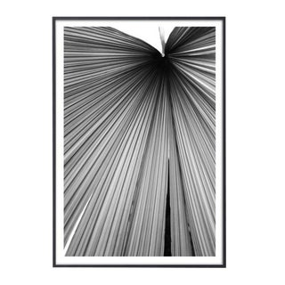 """Palm Frond #4"" Unframed Photographic Print For Sale"