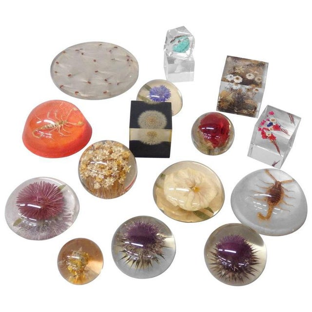 Plastic 16-piece Collection Resin Captured Flowers and Insects For Sale - Image 7 of 7