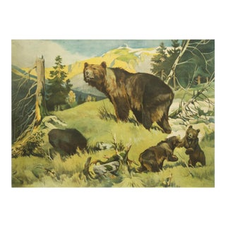 Antique Bear School Poster by Franz Roubal for Leipziger Schulbildverlag, 1930s For Sale