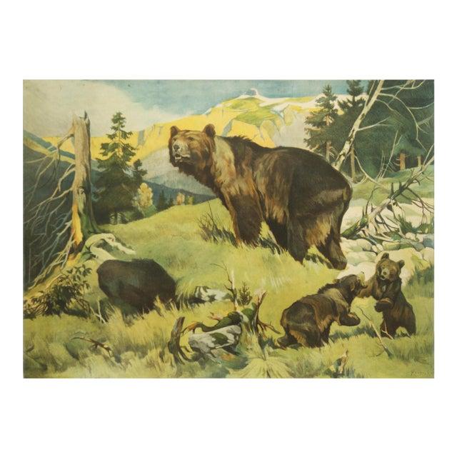Antique Bear School Poster by Franz Roubal for Leipziger Schulbildverlag, 1930s For Sale