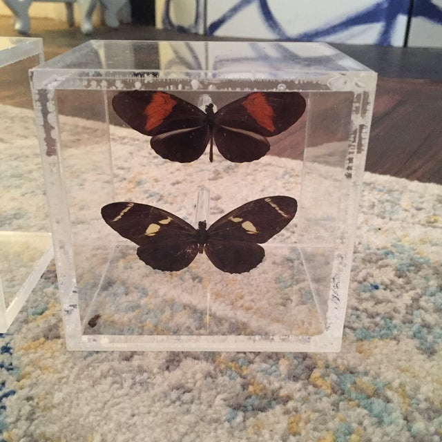 Lucite Cube Box Encased Butterfly Specimens Oddities Curiousities- a Pair - Image 10 of 11