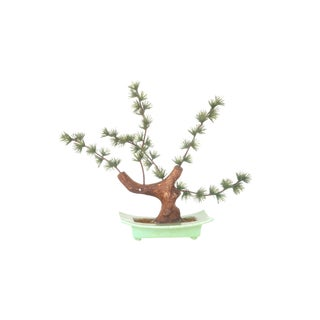 Ceramic Bonsai Tree Sculpture