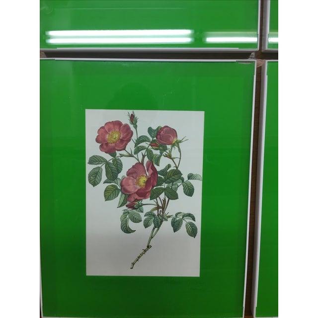 Framed Rose Botanical Prints - Set of 8 - Image 5 of 10
