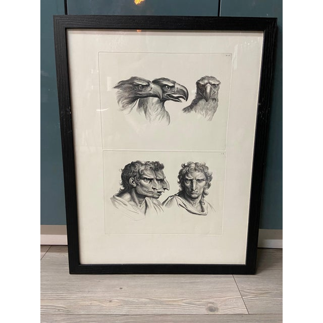 Man as Eagle - Physiognomic Heads Series Framed Illustration by Charles Le Brun For Sale - Image 12 of 12