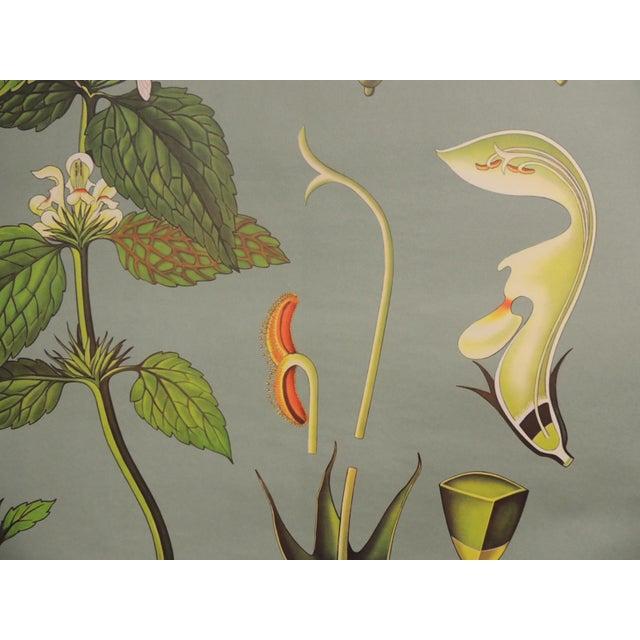 "Vintage Botanical Print ""White Deadnettle"" by Hagemann, Germany, 1975 - Image 2 of 6"
