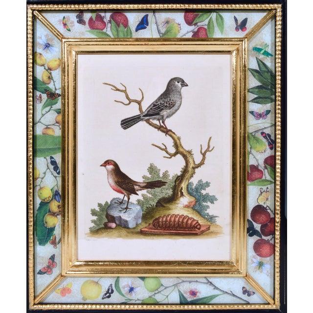 George Edwards C. 1740 George Edwards Engravings of Birds - Set of 12 For Sale - Image 4 of 12