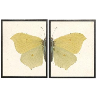 "Split Yellow Butterfly - 38"" X 25"" For Sale"