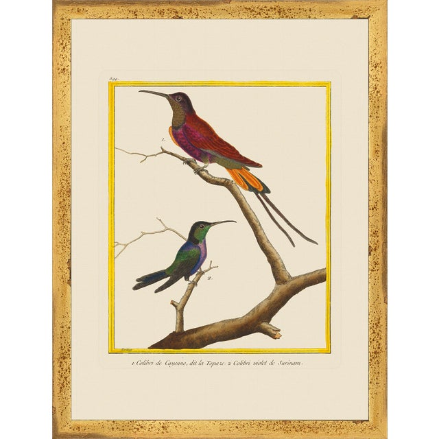 Set of six framed giclee reproductions of mostly hummingbirds. I think the one blue bird above the green bird with the...