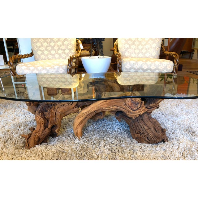 Coffee Vintage Burl Wood Root and Tempered Glass Coffee Table. For Sale - Image 8 of 10