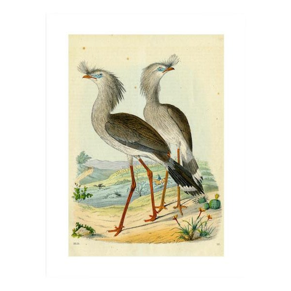 Antique '2 Silly Cranes' Archival Print - Image 1 of 4