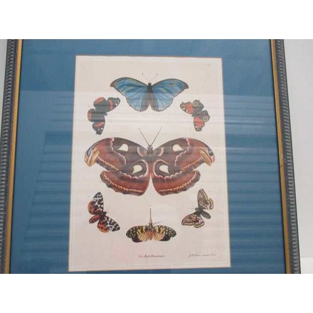Vintage Print Framed in Wedgewood Blue Color Wood Frame With Glass Cover For Sale In Miami - Image 6 of 10