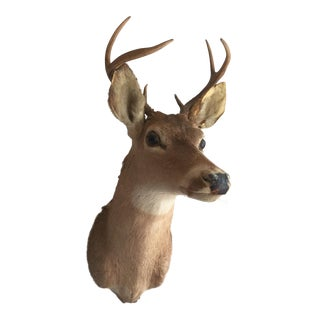 Deer Bust With Antlers For Sale