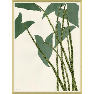 Caladium Framed Art Print For Sale