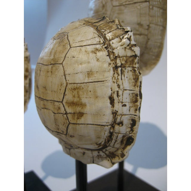 Mounted Resin Turtle Shells - Set of 5 - Image 5 of 5
