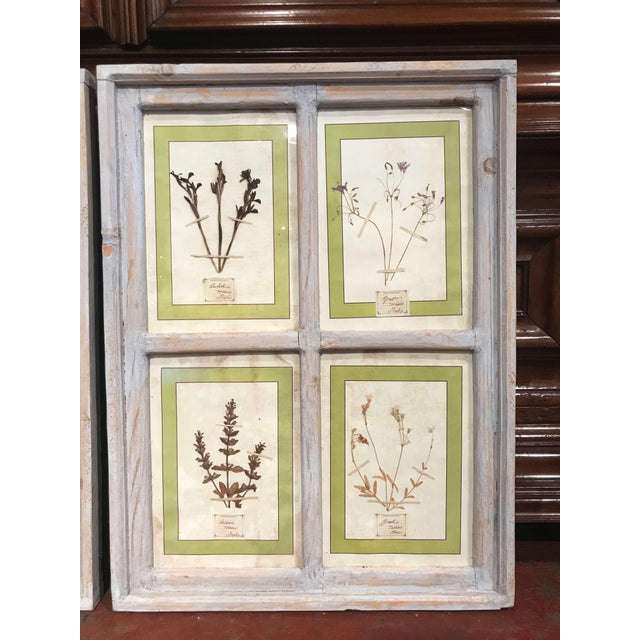 Italian Pair of 21st Century Italian Dried Botanical Flowers in Painted Frames For Sale - Image 3 of 11
