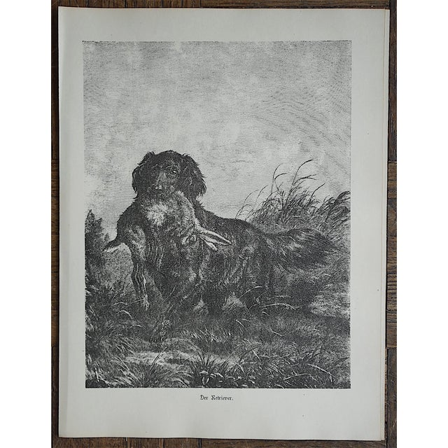 Antique Hunting Dog Engravings - Set of 3 For Sale - Image 5 of 5