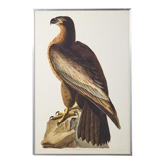 Audubon Bird of Washington Plate #11 Havell Edition For Sale