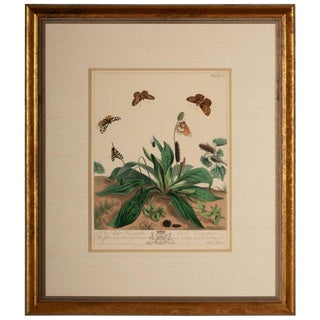 Plate Xvi, the Aurelian or Natural History of English Moths and Butterflies For Sale