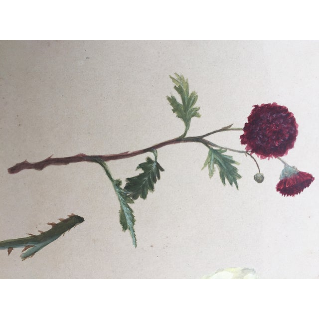 Antique Painting Botanical Study in Gouache - Image 4 of 4