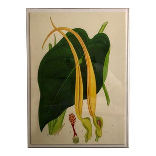 Vintage 1850's Botanical Green Lily Art Print For Sale