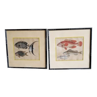 Late 19th Century Pair of Fish Prints For Sale
