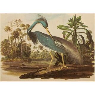 Louisiana Heron by John J. Audubon, XL Vintage Cottage Print For Sale