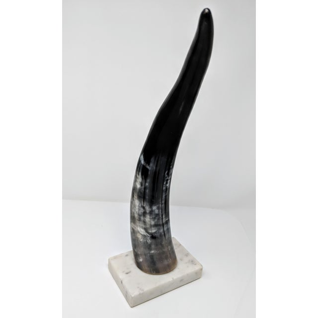 Horn on Marble Base For Sale - Image 4 of 12