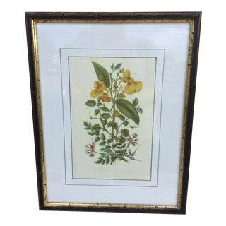 Ferguson Phillips Botanical Print For Sale
