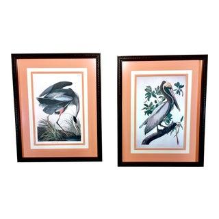 Mid-Century Audubon Seabird Prints- Custom Framed- a Pair