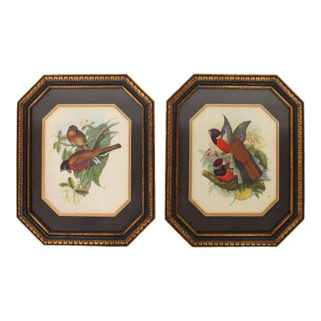 Framed European Ornithological Prints in the Manner of John James Audubon - a Pair For Sale
