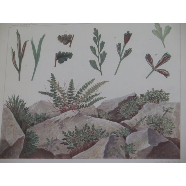 Vincent Brooks Day & Sons Decorative Lithograph Fern Prints - a Pair For Sale In Philadelphia - Image 6 of 13