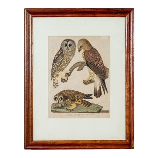 Antique Ornithology Print II For Sale