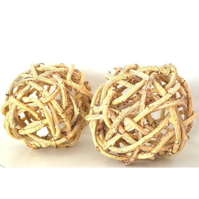 Natural Windsor Knot Balls in Dried Wisteria Stems - a Pair For Sale - Image 10 of 10