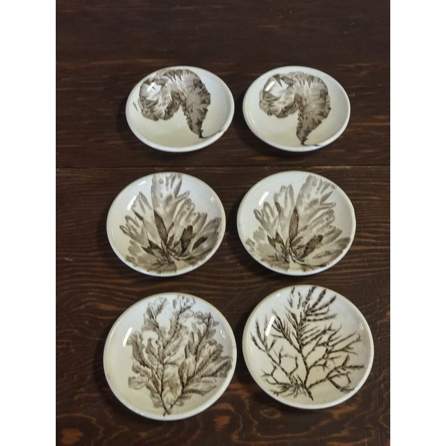 Ceramic Seaweed Pattern Brown Transferware by Wedgewood For Sale - Image 7 of 7