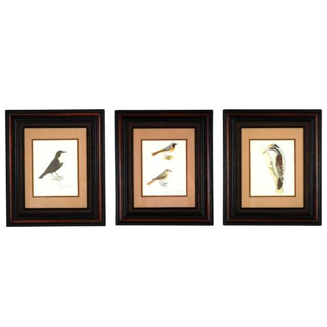 Vintage Framed Bird Prints - Set of 3 - Image 5 of 10