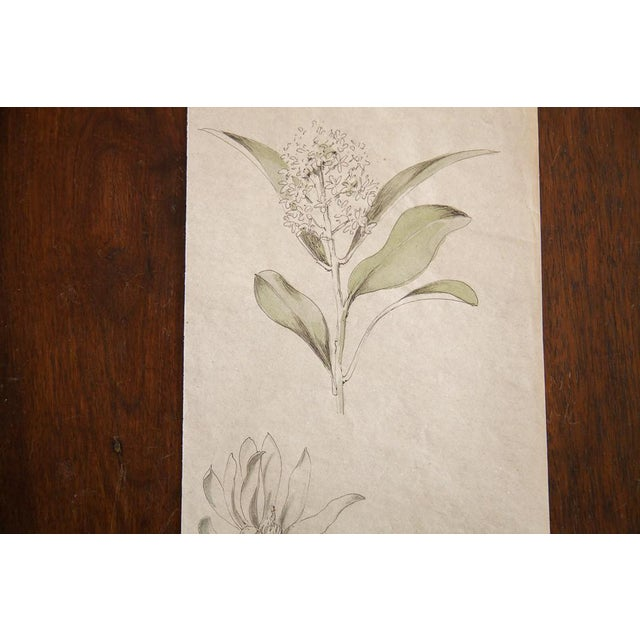 Antique Dainty Flower Watercolor Drawing - Image 3 of 4
