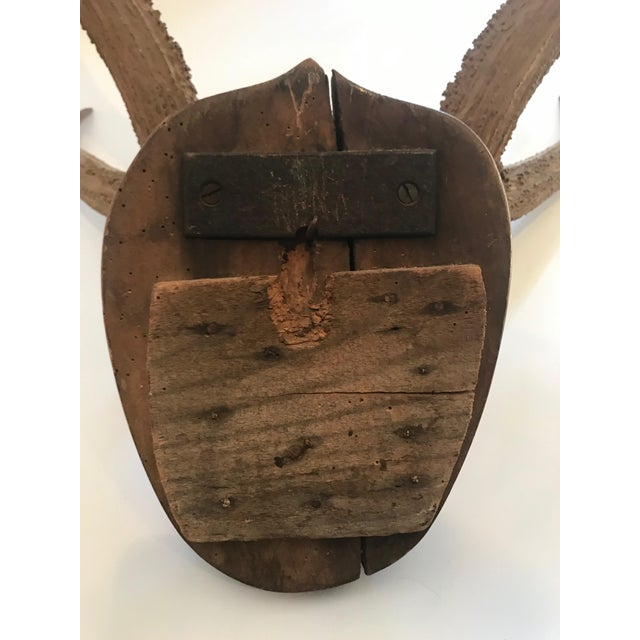 Late 20th Century Mounted Horn Plaque For Sale - Image 10 of 13