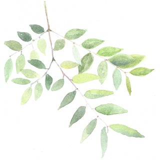 Original Watercolor of Green Leaves