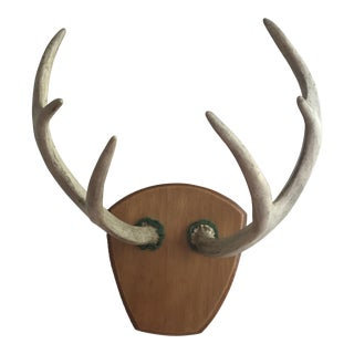 Vintage Deer Antler Mount For Sale