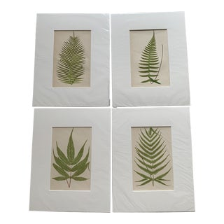 Unframed Series of Four Fern Prints For Sale
