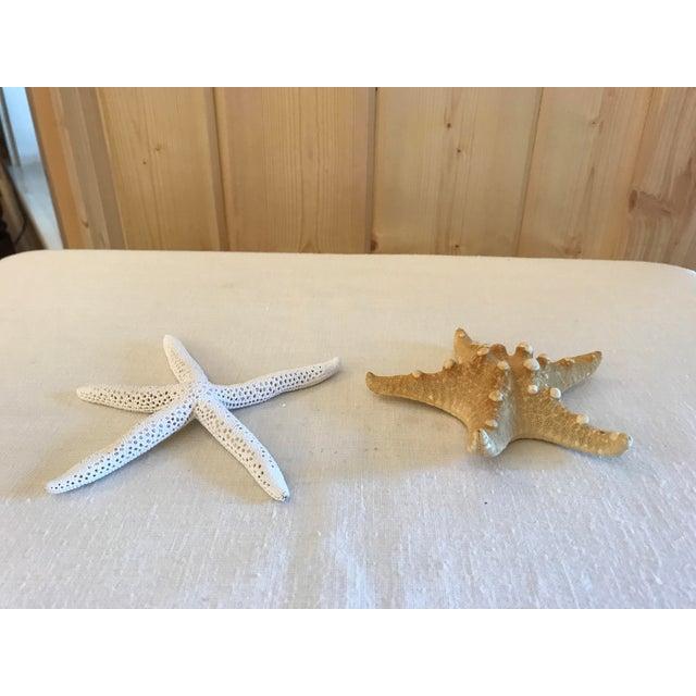 Natural Starfish - a Pair - Image 3 of 9