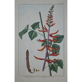 "Rare 18th Century Hand Colored Botanical Engraving Plate LXIV From ""Jardin D'Eden"" by Pierre Joseph Buchoz For Sale"