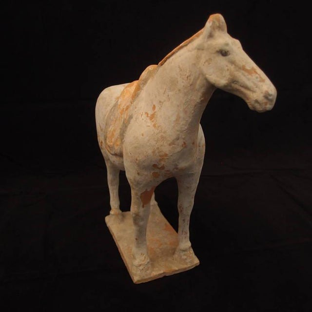 15th Century & Earlier Tang Dynasty Painted Pottery Model of a Horse For Sale - Image 5 of 6