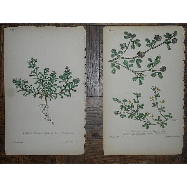 Realism Antique Botanical Lithographs - Set of 8 For Sale - Image 3 of 6
