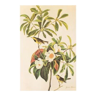 Gardenia and Bachman's Warbler by John James Audubon, Vintage Cottage Print For Sale