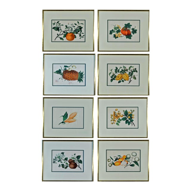 Chinese Fruit Watercolor Paintings on Pith Paper - Set of 8 For Sale