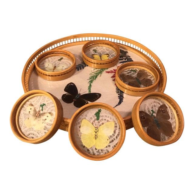 Butterfly Specimen Tray & Coaster Set - Image 1 of 11