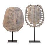 Image of Faux Turtle Shells on Stands - a Pair For Sale