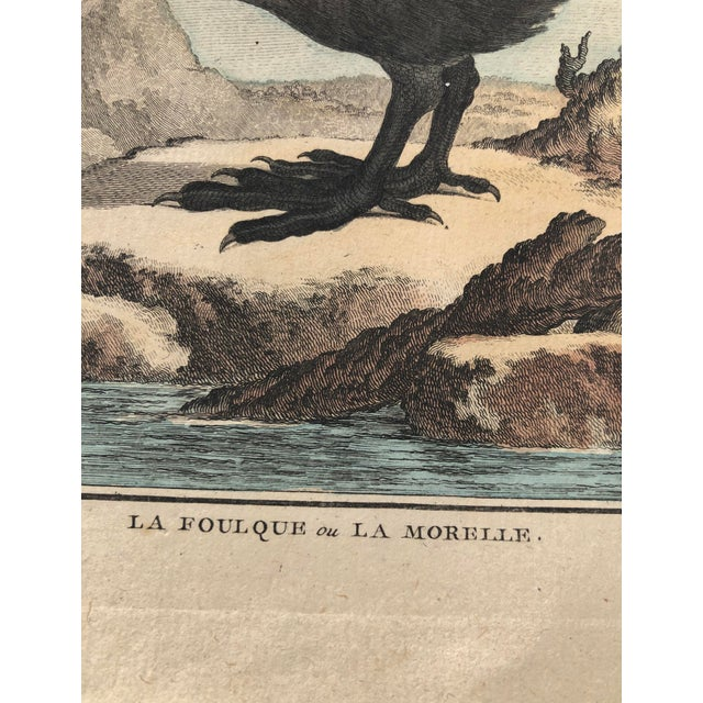 Early 18th Century 18th Century French Bird Engraving Signed by Jacques De Sève Featuring an Eurasian Coot For Sale - Image 5 of 13