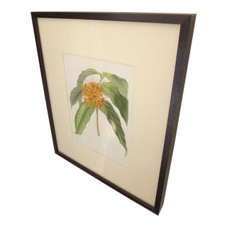 A Pair of Antique Botanical L. Constans Hand Colored Lithography Prints For Sale